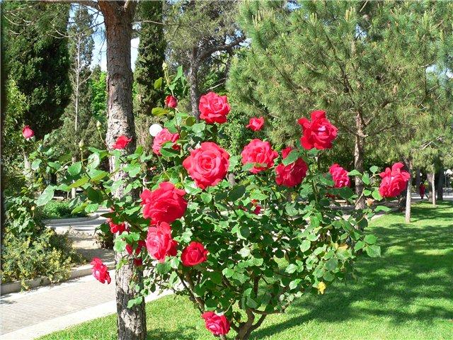 Любимый сад садоводов клумба своими