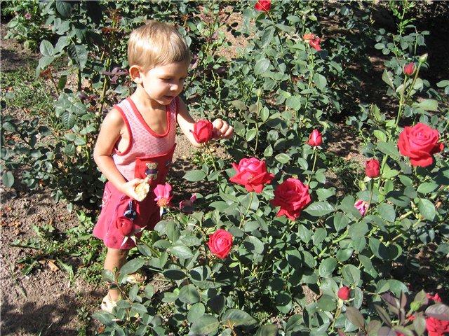 Перед нашим номером росли розы